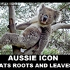 omg_its a drop bear