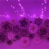 Burning violets