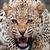 tigress011662